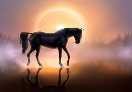 马,日落,水,森林,反思