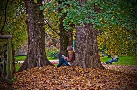 女孩,公园,秋季,树木,美女,叶子,金色的秋天