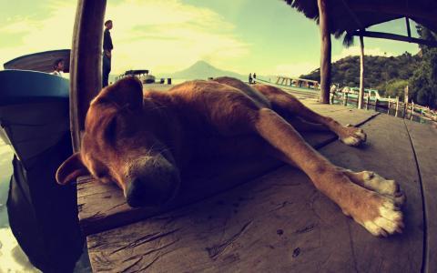 狗,睡觉,宏,系泊