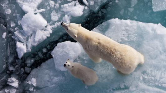 北极熊,熊,冬天,雪,照片,积极