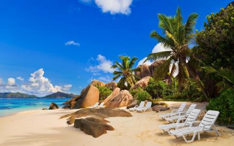 沙滩,沙滩,天空,棕榈树,躺椅