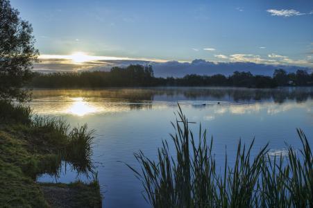 湖,鸭,岸,草,树,天空,太阳,日落,云