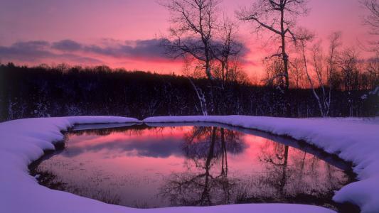 森林,树木,晚上,雪,冬天,湖
