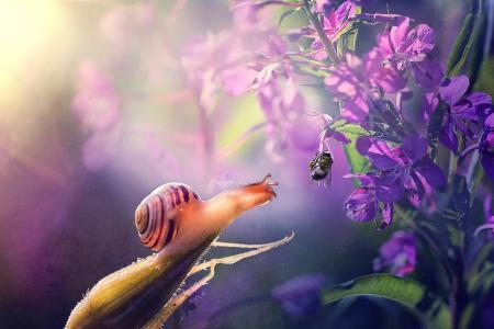 朱莉娅Voinich,蜜蜂,性质,蜗牛,宏,鲜花