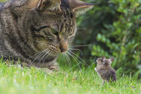 猫,老鼠,老鼠,小胡子,会议