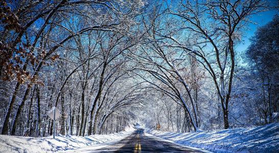 路,冬天,树,白霜,雪