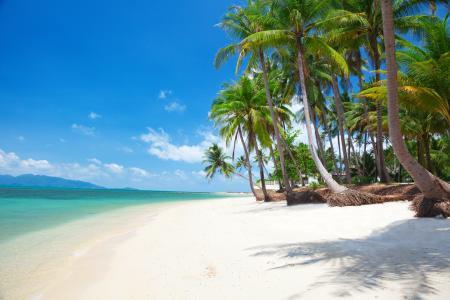 热带,棕榈树,海洋,沙滩
