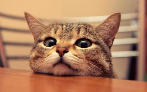 软萌娇小的猫咪