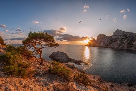 日落,海,岸,树,天空,海鸥