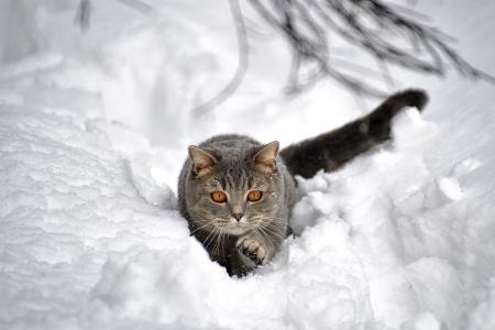 动物,猫,冬天,雪