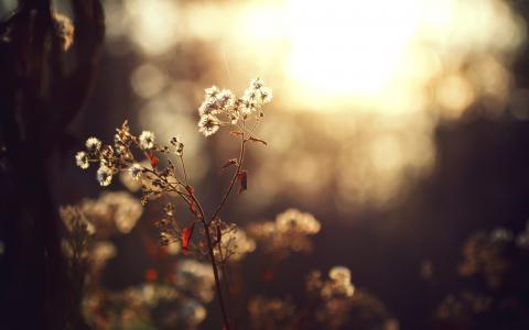 树,太阳,植物