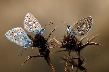 宏,花,翅膀,蝴蝶,荆棘