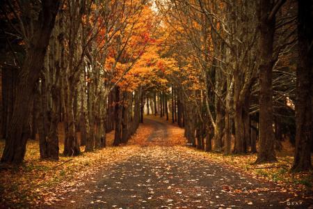 性质,叶子,路,秋天