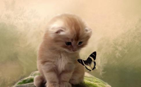 猫,小猫,蝴蝶,注意,背景