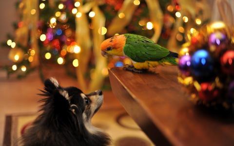 狗,鹦鹉,假期,房子