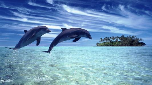 天空,性质,海,海豚,景观