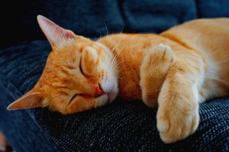 午后休憩的慵懒可爱小猫