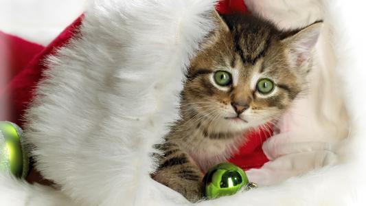 小猫,新年