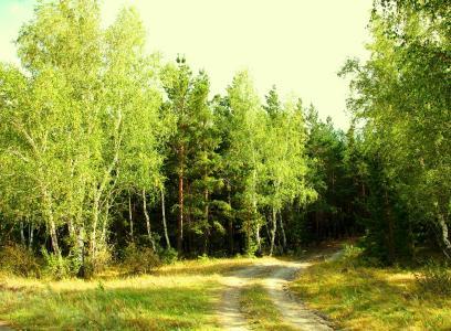 夏天,森林,绿色,绿色,绿色,大炮,漂流,kokshetau,一天,路,自然保护区,树,桦木,林业,美丽