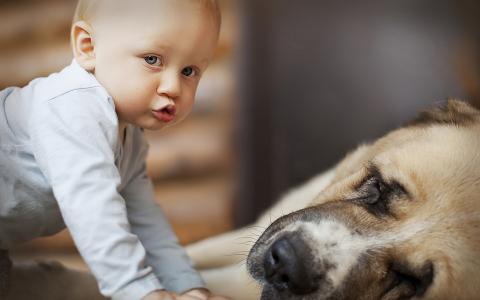 孩子,男孩,宏观照片,积极,狗,朋友