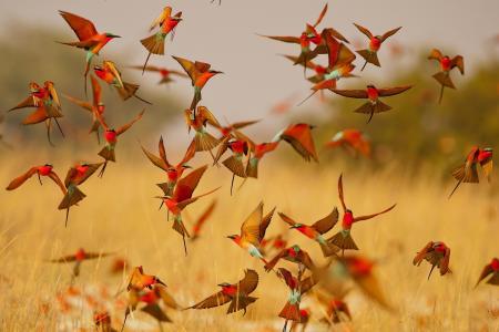 翅膀,鸟,鸟嘴,许多,羊群,山毛榉,卡梅尔甲虫