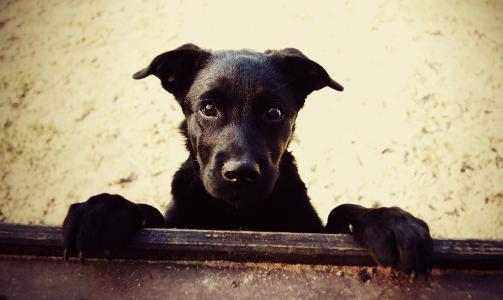 狗,朋友,照片,积极