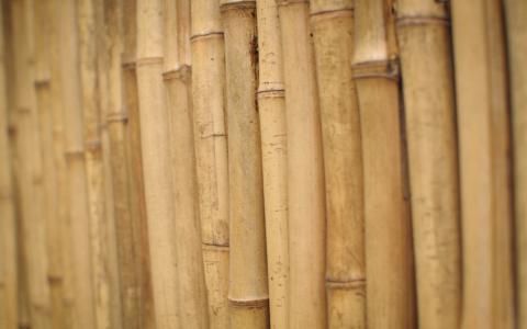 茎,竹,木