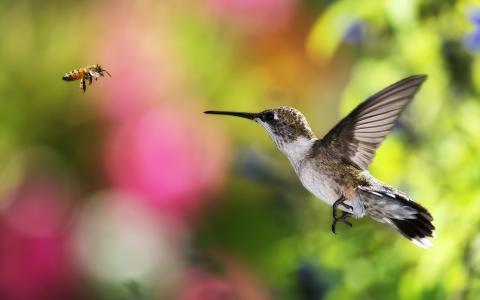 蜂鸟,飞行,散景,蜜蜂,背景,鸟