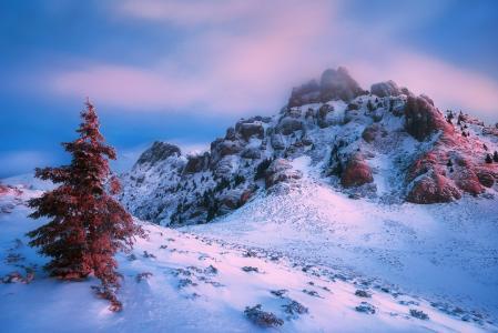 冬天的伟大,冷杉,山,雪,天空,Szabo Zsolt Andras