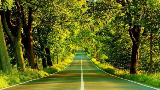 路,树,森林,绿色