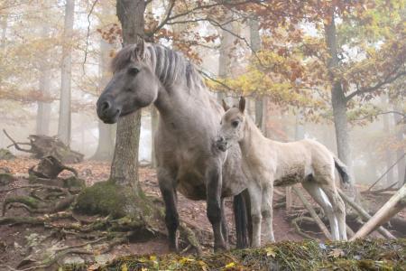 马,树,森林