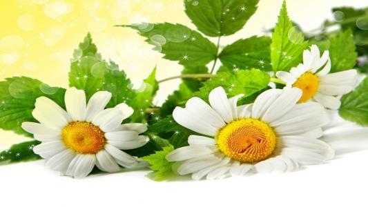 鲜花,霜降,宏