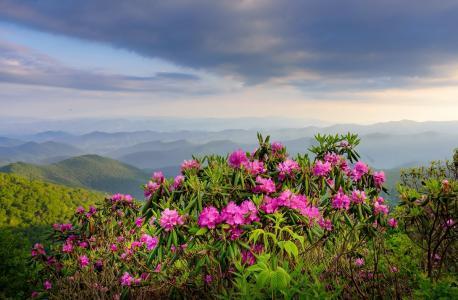 自然,山,鲜花