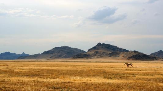 草原,山,马,远处的种马
