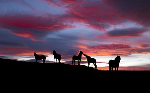 马,日落,天空