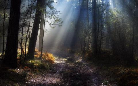 森林,森林道路,阴霾,太阳的光芒