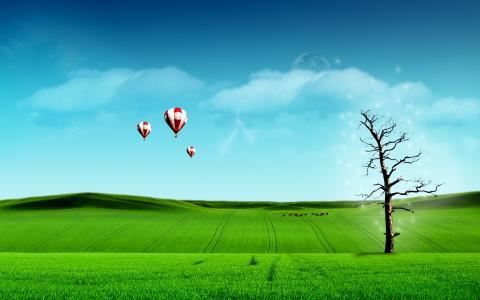 场,天空,蓝蓝的天空,云,绿色的田野,树