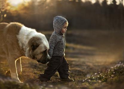 男孩,狗,朋友,宏,照片,性质,积极