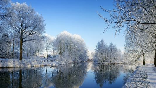 冬天的时候,白雪覆盖的树木,白色的树木