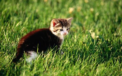 小猫,猫,草,猫,猫,猫,猫,猫