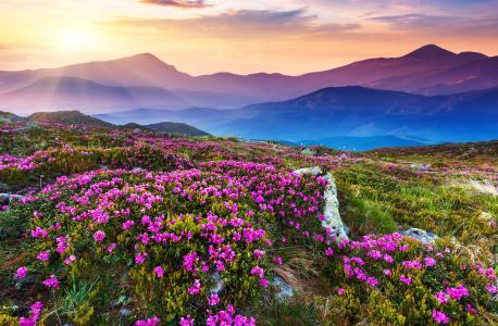 天空,景观,天空,太阳,山,花的领域