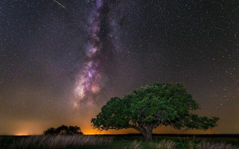 性质,天空,树木,银河,乳白色,夜晚,星星
