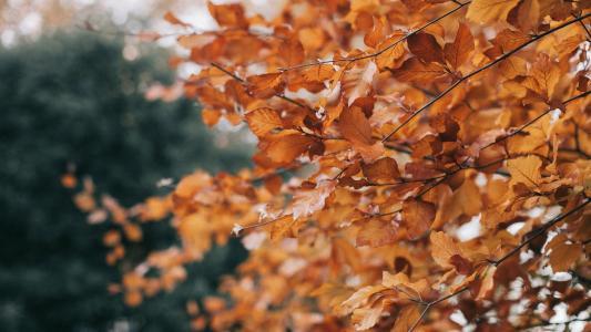 唯美秋叶自然风景