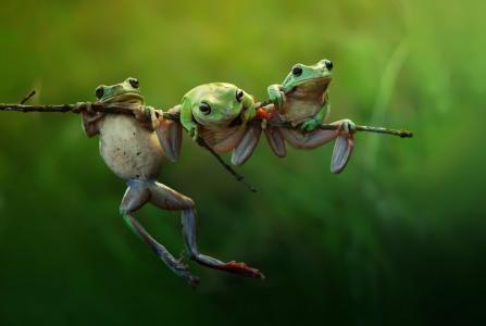 宏观照片,创意,分支,青蛙,构成