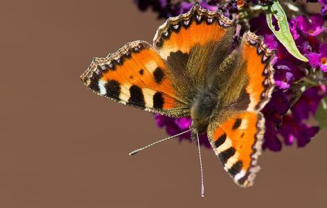 蝴蝶,宏,花卉,蝴蝶世界,美容