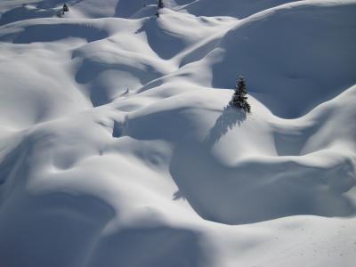 雪堆,小山,雪,冬天,圣诞树