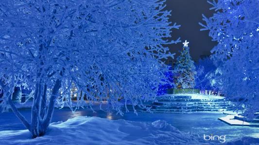 雪,新的一年,圣诞树