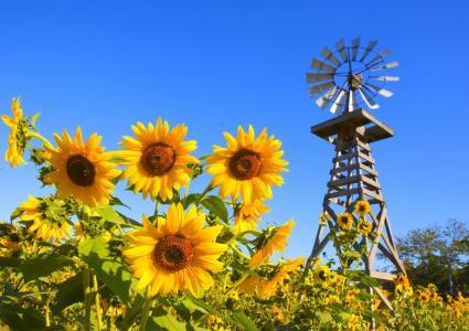 性质,风车,天空,谷,沙,向日葵