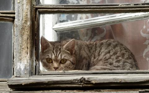 猫,窗,框架,窥视