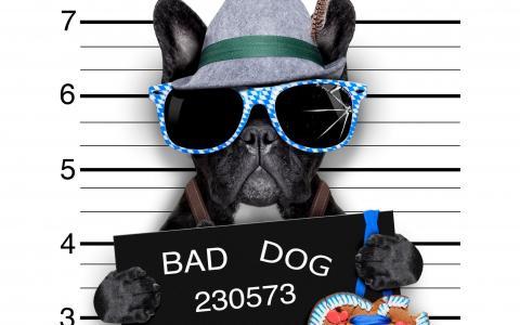 狗,眼镜,帽子